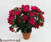 azálea  művirág fukszia pink  cserépben