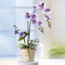 Orchidea kaspóban dekor kavicsokkal új 50 cm