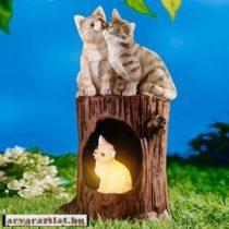 napelemes solár macska család új